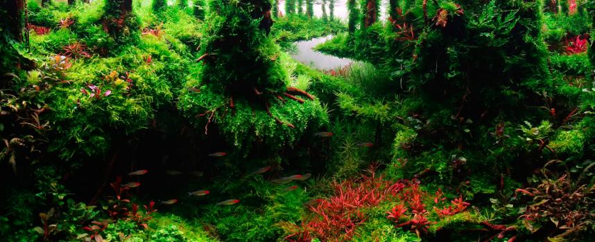เริ่มต้น จัดพรรณไม้น้ำ ตู้ไม้น้ำ ขั้นพื้นฐาน